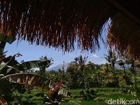 Cara Warga Kembang Kuning Bangkitkan Pariwisata Pascagempa Lombok