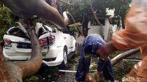 Hujan Badai di Cianjur, Mobil-Motor Tertimpa Pohon Tumbang