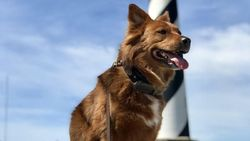 Perkenalkan Mo, Anjing yang Jadi Agen Perjalanan