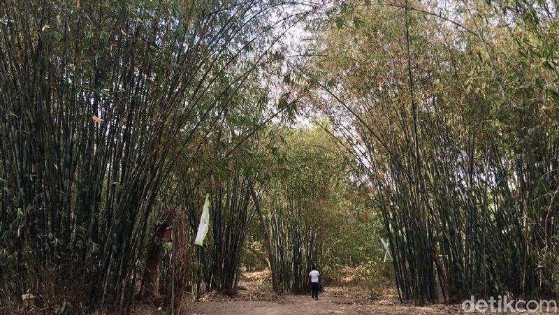 Inilah kawasan wisata Hutan Bambu di pedalaman Desa Alu, Kecamatan Alu, Kabupaten Polewali Mandar, Sulawesi Barat. Destinasi ini bisa traveler kunjungi akhir pekan ini. (Abdy/detikcom)