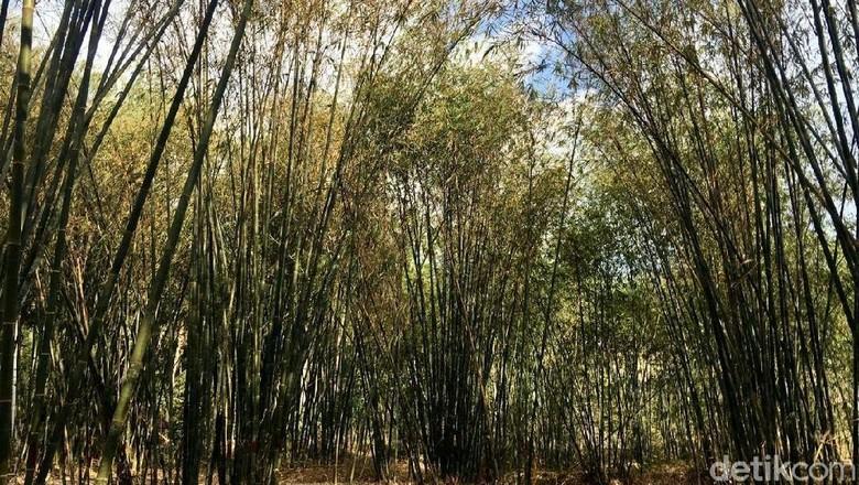 Hutan bambu Instagramable di Polewali Mandar (Abdy/detikcom)