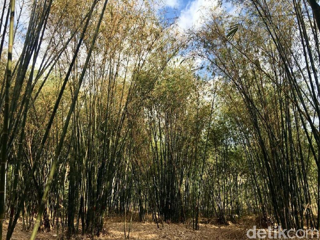 Bukan Jepang, Ini Hutan Bambu Instagramable di Sulawesi