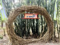 Bukan Jepang, Ini Hutan Bambu Instagramable di Polewali Mandar