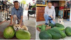 Keren! Kakek Ini Panen Buah Kundur yang Ia Tanam Selama 50 Tahun