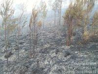 Hutan di Gunung Rinjani Terbakar, Pendaki Diminta Waspada