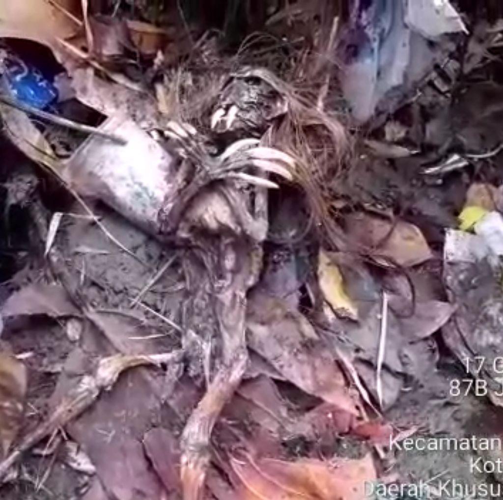 Dikira Kadal, Ternyata Jenglot yang Ditemukan Petugas UPK di Kali Jaksel