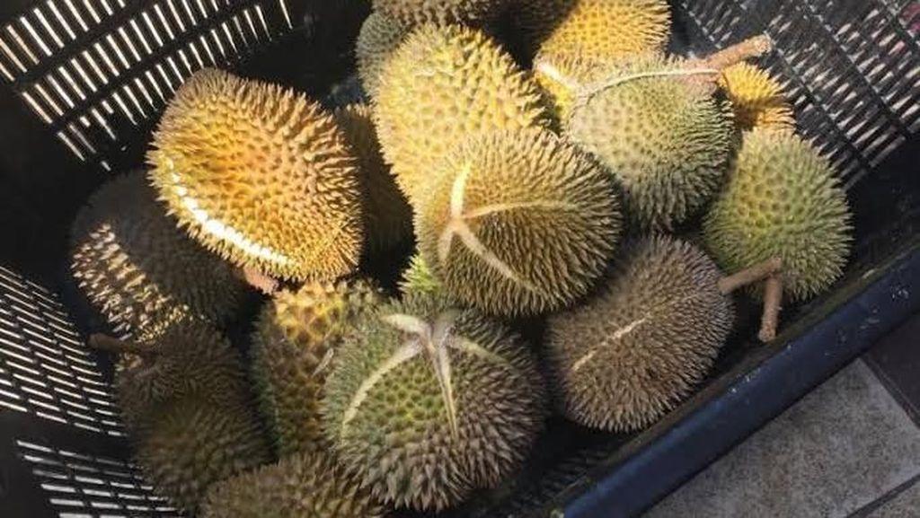 Curi 12 Buah Durian, Pria Singapura Dibui dan Didenda Rp 12 Juta
