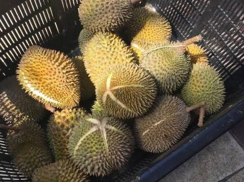 Durian Isi Heroin Senilai Rp 3,2 M Gegerkan Bandara Subang