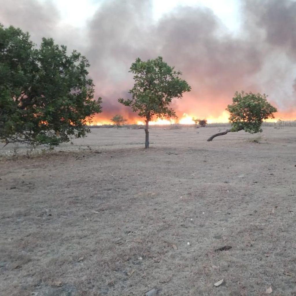 Padang Savana Gunung Tambora Terbakar