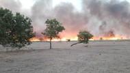 Padang Sabana Gunung Tambora Terbakar