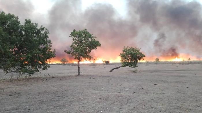 Sabana di Gunung Tambora terbakar (Dok. Istimewa)