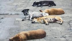 Susul Shenzen, Korsel Bakal Larang Konsumsi Daging Anjing?
