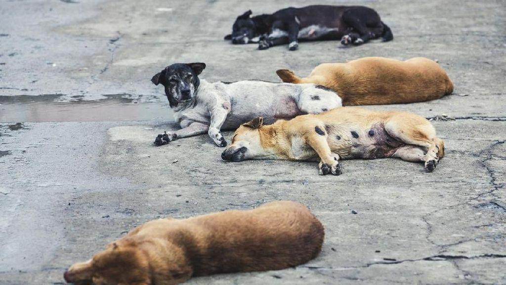 Pemiliknya Positif Corona, 13 Anjing di Vietnam Dimusnahkan