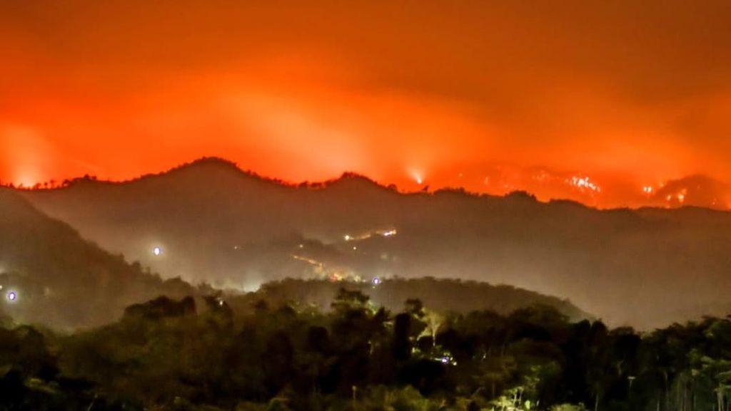 Lereng Gunung Argopuro Kembali Terbakar, Dua Tim Dikerahkan ke Lokasi