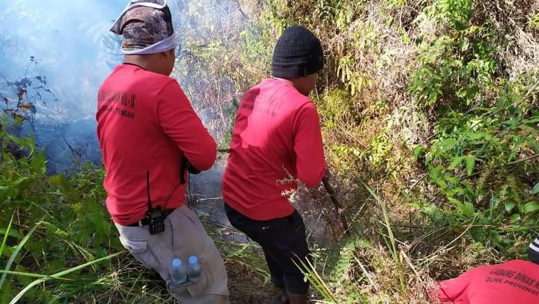 Kebakaran Melanda Hutan di Lereng Gunung Sumbing
