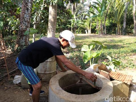 Pengolahan biogas dari kotoran babi.