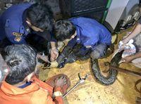 Ular Sanca 4,5 Meter Ditemukan di Permukiman Tebet Jaksel