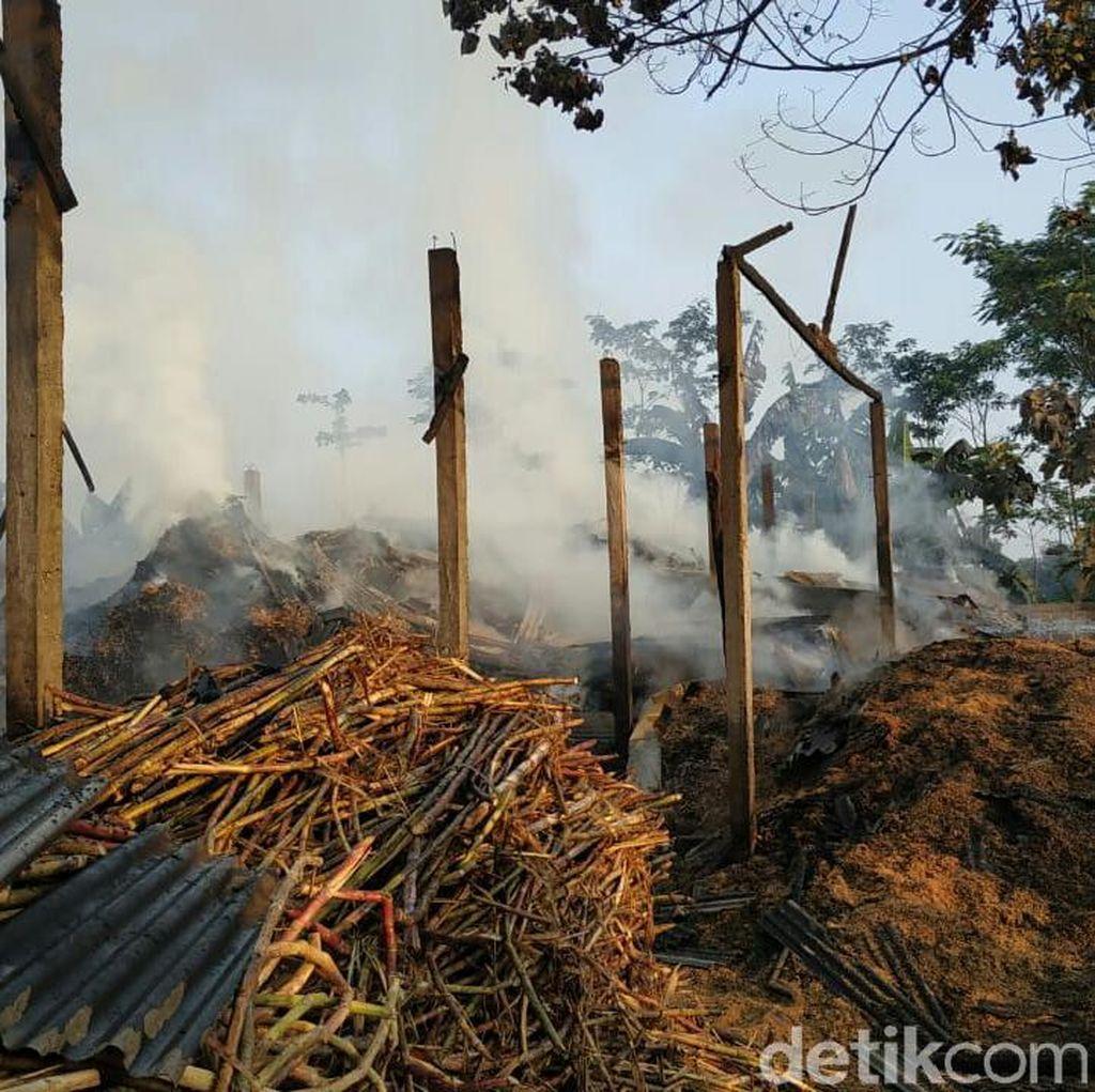 Pabrik Gula Rakyat di Tulungagung  Ludes Terbakar