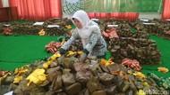 Nasi Gegok Khas Trenggalek Pecahkan Rekor MURI