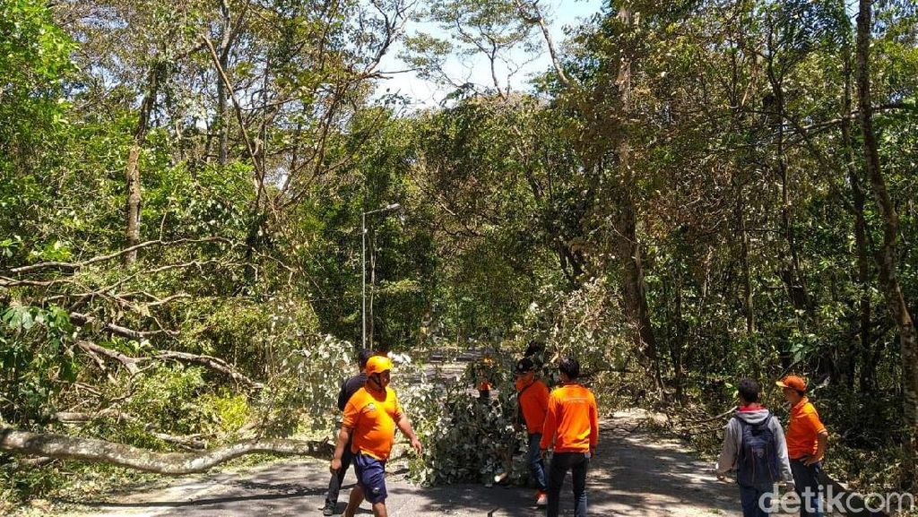 Angin Kencang Tumbangkan Pohon di Jalur Mojokerto-Batu Via Cangar