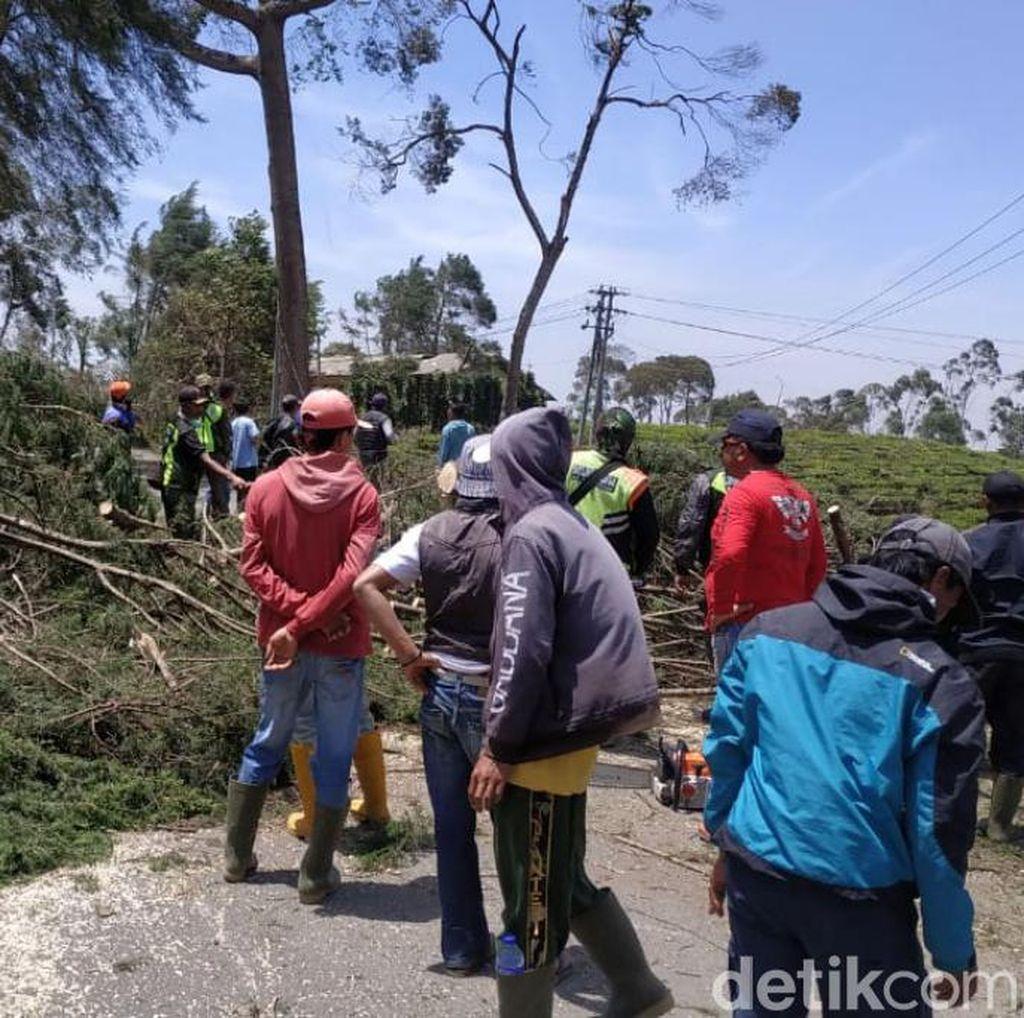 Angin Kencang Pangalengan: 1.200 Rumah Rusak dan 700 Pohon Tumbang