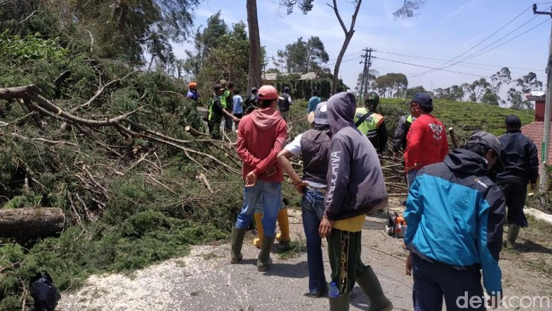 Angin Kencang Menerjang, Puluhan Pohon Tumbang Turup Jalan di Pangalengan