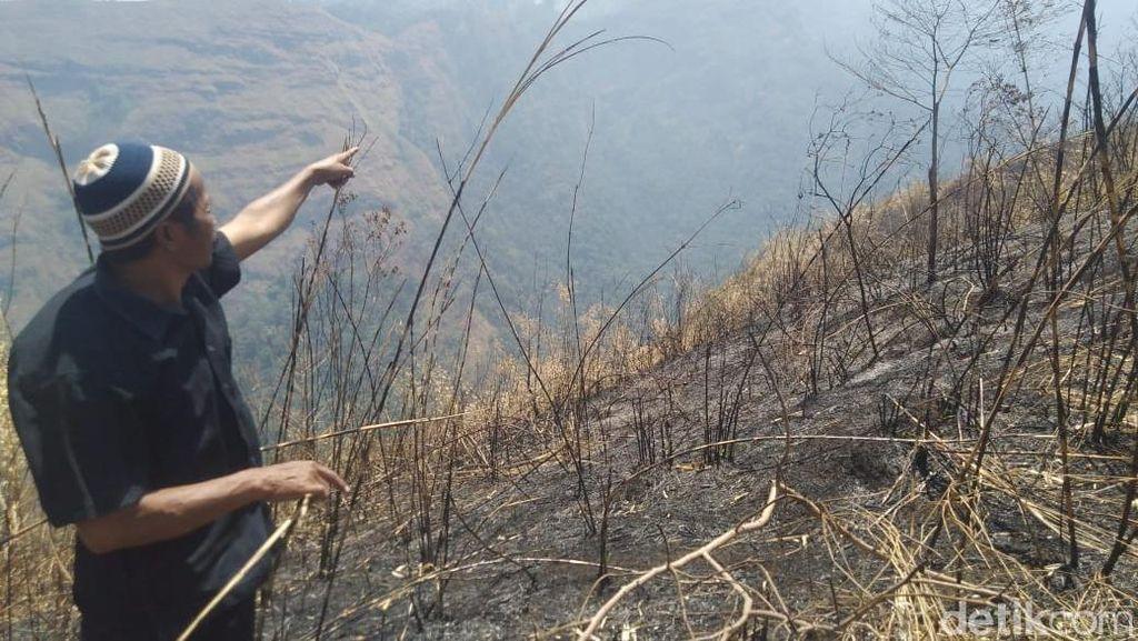 65 Hektare Hutan di Gunung Anjasmoro Jombang Terbakar