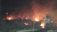 Hutan Pinus di Bondowoso Terbakar, Warga Cegah Api ke Permukiman
