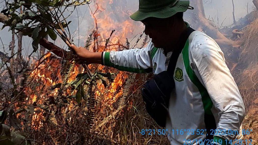 Hutan Gunung Rinjani Terbakar Hebat, Semua Pendaki Selamat