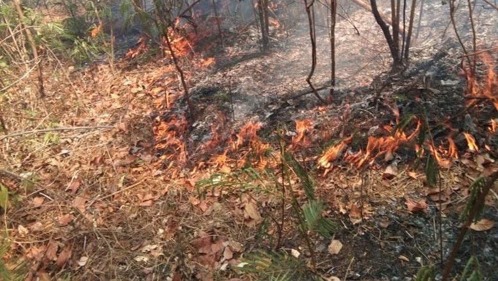 Sejumlah Titik Api di Gunung Wilis Sisi Utara Sudah Padam