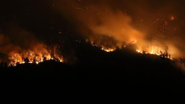 Penampakan Kobaran Api di Hutan Gunung Merapi Ungup-ungup