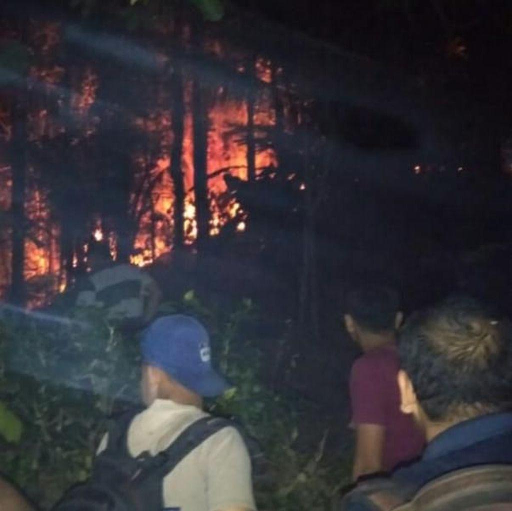 8 Hektare Hutan Pinus di Trenggalek Terbakar