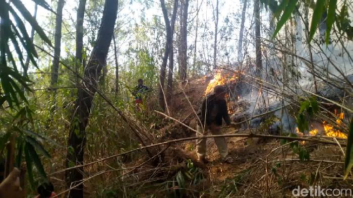 Hutan pinus di Mamasa terbakar, area pekuburan hampir terdampak. (Abdy Febriady/detikcom)