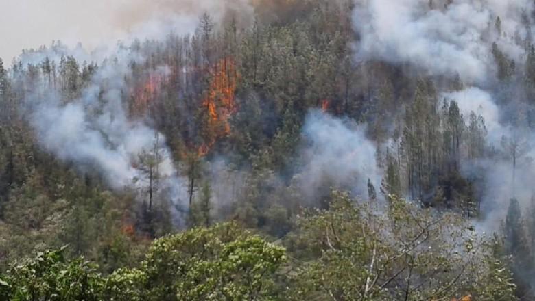 75 Hektare Area Hutan Gunung Bawakaraeng Sulsel Terbakar