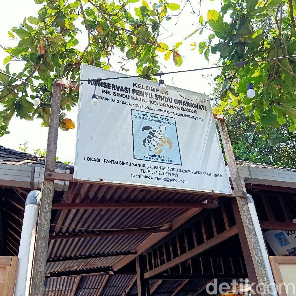 Bukti Minim, Polisi Belum Tetapkan Tersangka Pencurian Puluhan Penyu di Sanur