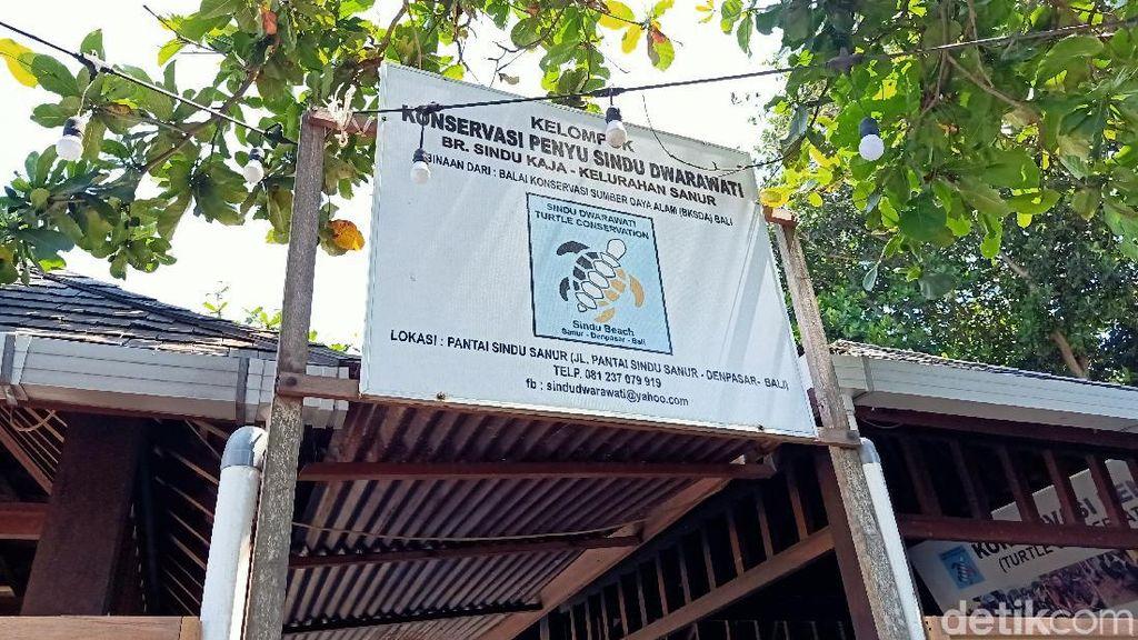 Polisi Selidiki Kasus Pencurian Puluhan Penyu di Sanur