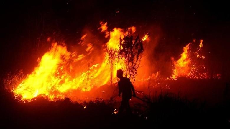 Slamet Tewas Tertimpa Cabang Pohon Saat Padamkan Hutan di Ponorogo