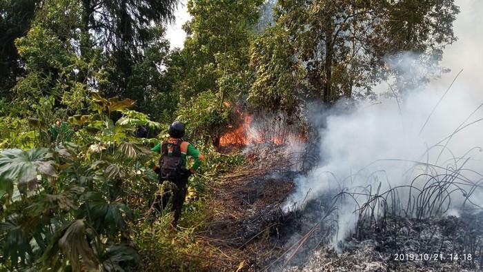 Kebakaran hutan Petarangan di dataran tinggi Dieng, Banjarnegara, Selasa (22/10/2019). (Foto: dok. Istimewa)