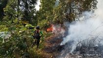 30 Hektare Hutan di Dieng Terbakar, Api Belum Padam