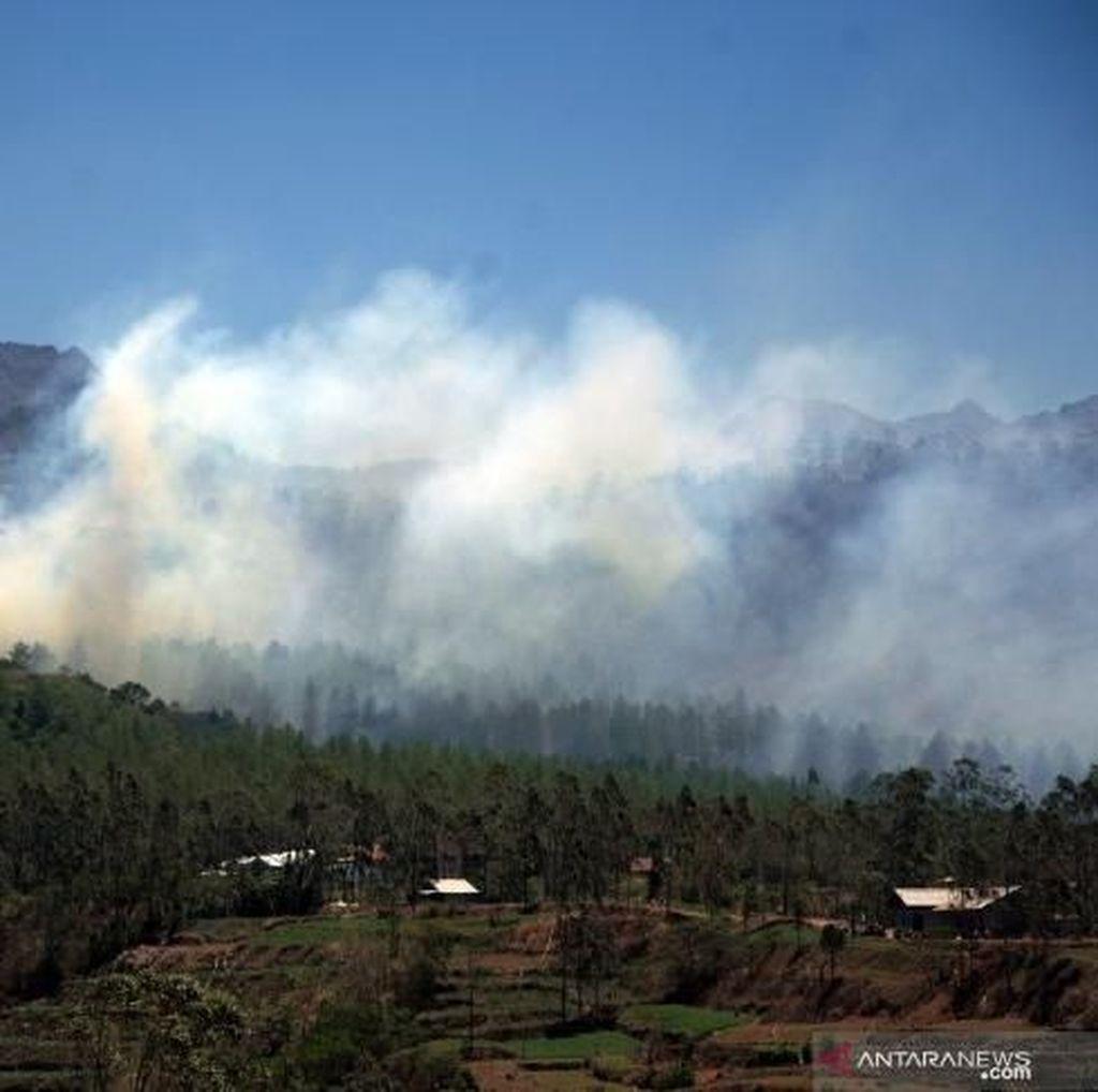 Pemkab Gowa: Karhutla di Tinggimoncong Capai 10 Hektare