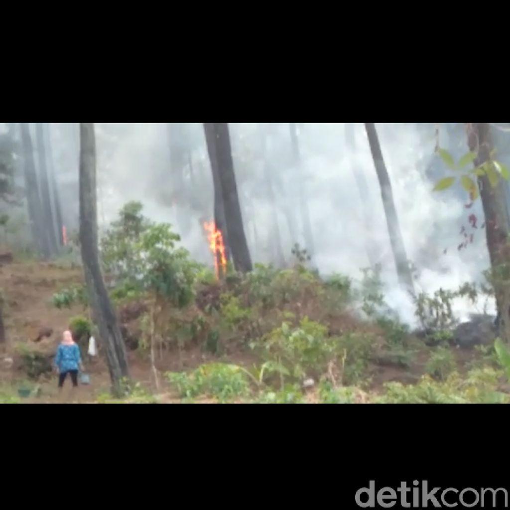 Hutan Lereng Gunung Slamet Wilayah Tegal Kembali Terbakar