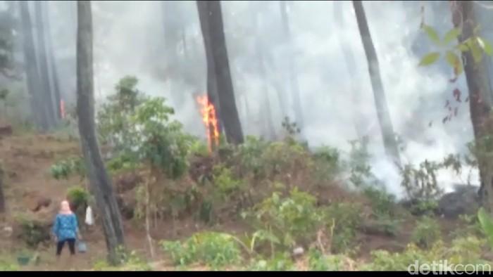 Kebakaran hutan di Gunung Slamet. -- Foto: Imam Suripto/detikcom