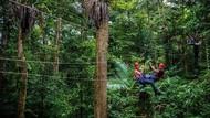 Pasutri Jatuh dari Flying Fox di Hutan Australia, 1 Orang Tewas dan 1 Luka