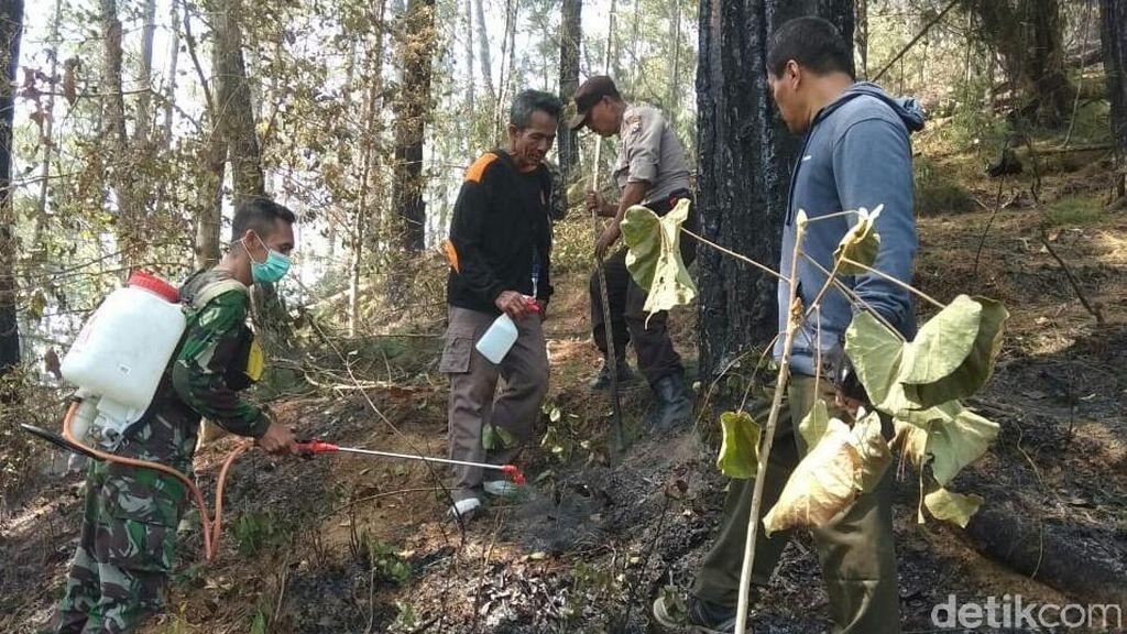 Kebakaran 8 Hektare Hutan Pinus di Trenggalek Dipastikan Padam