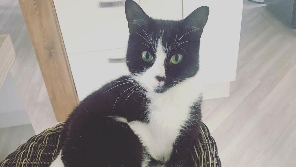 Kisah Kucing dalam Koper Saat Majikan Mau Liburan