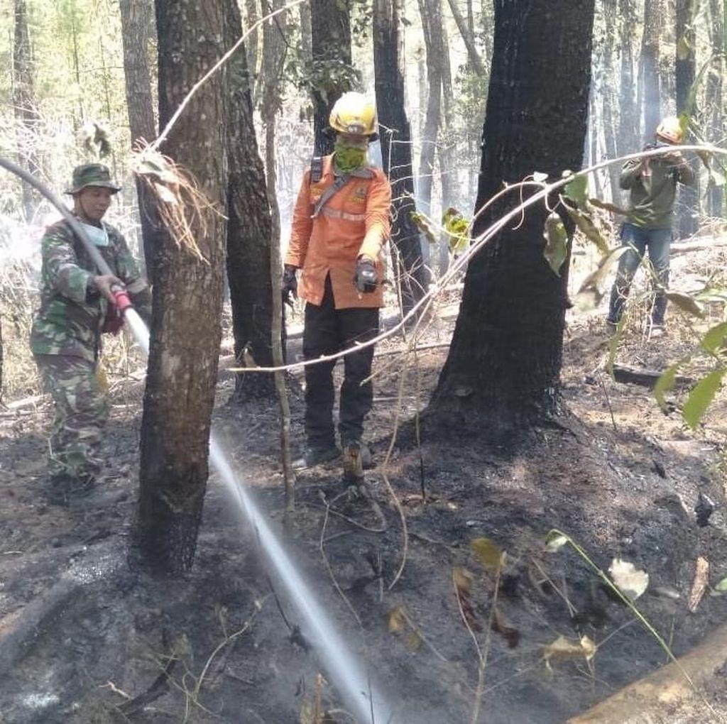 Pemadaman Kebakaran Hutan Gunung Lompobattang Sulsel Masih Dilakukan