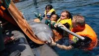 Inilah kisah penyelamatan lumba-lumba yang dilakukan The Dolphin Project. Lumba-lumba ini diselamatkan dari sebuah kolam renang sebuah hotel di Bali. (dok. The Dolphin Project)