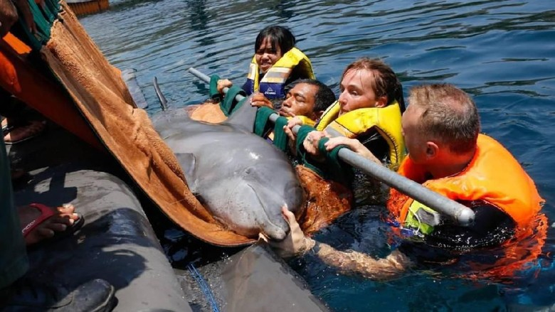 Lumba-lumba yang diselamatkan The Dolphin Project (dok. The Dolphin Project)