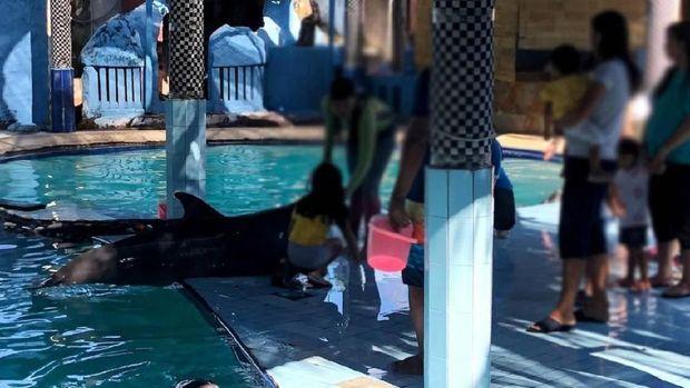 Kisah Penyelamatan 4 Lumba-lumba dari Kolam Renang Hotel di Bali
