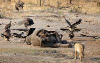 (Philimon Bulawayo/Reuters)